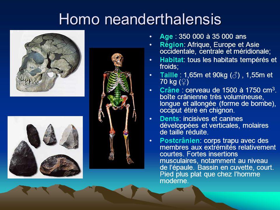 Homo neanderthalensis Age : 350 000 à 35 000 ans Région: Afrique, Europe et Asie occidentale, centrale et méridionale; Habitat: tous les habitats temp