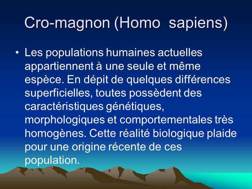 Cro-magnon (Homo sapiens) Les populations humaines actuelles appartiennent à une seule et même espèce. En dépit de quelques différences superficielles