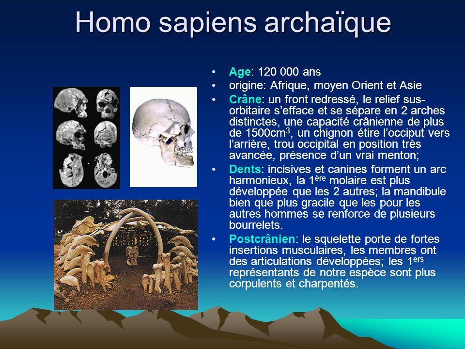 Homo sapiens archaïque Age: 120 000 ans origine: Afrique, moyen Orient et Asie Crâne: un front redressé, le relief sus- orbitaire s'efface et se sépar