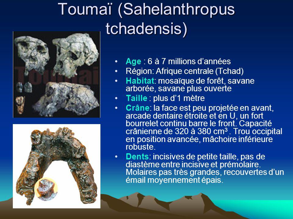 Toumaï (Sahelanthropus tchadensis) Age : 6 à 7 millions d'années Région: Afrique centrale (Tchad) Habitat: mosaïque de forêt, savane arborée, savane p