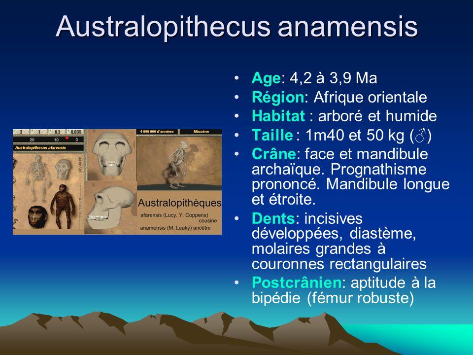 Australopithecus anamensis Age: 4,2 à 3,9 Ma Région: Afrique orientale Habitat : arboré et humide Taille : 1m40 et 50 kg (♂) Crâne: face et mandibule
