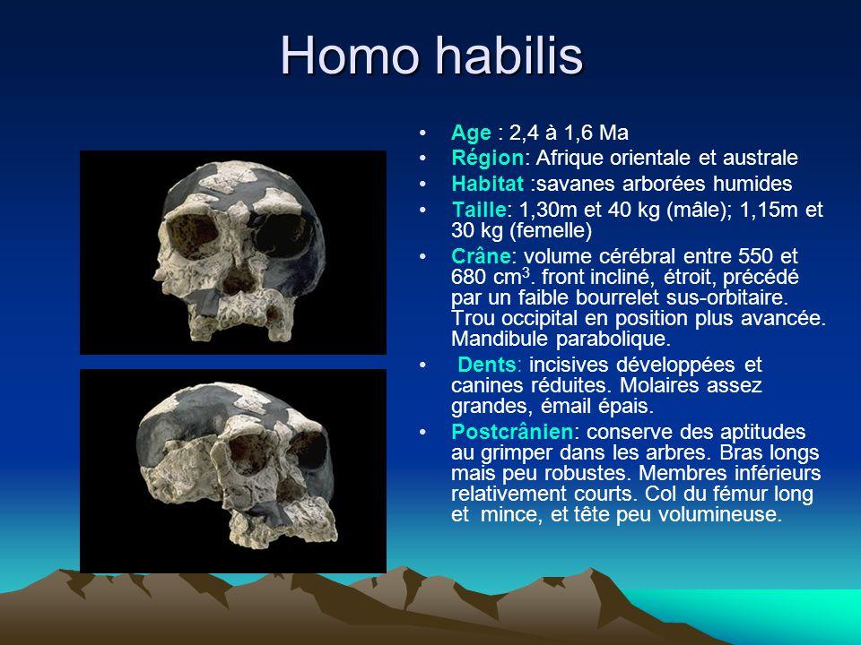 Homo rudolfensis Age: 2,4 à 1,7 Ma Région: Afrique orientale Habitat: savanes arborées et ouvertes Taille: 1,40m et 50 kg (♂) Crâne: cerveau compris entre 650 et 750 cm 3.