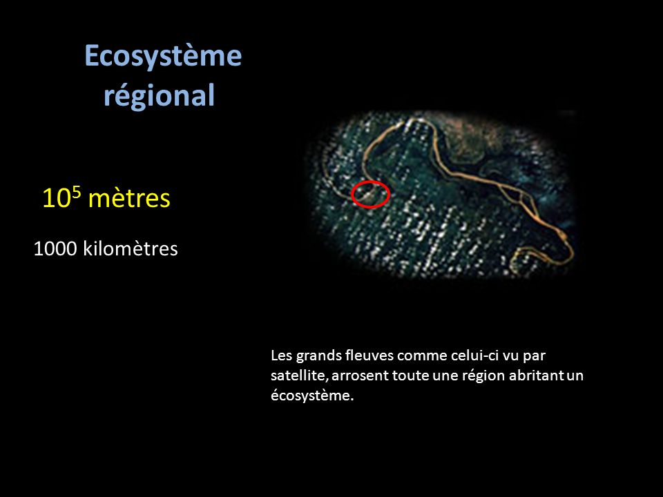 10 5 mètres 1000 kilomètres Ecosystème régional Les grands fleuves comme celui-ci vu par satellite, arrosent toute une région abritant un écosystème.