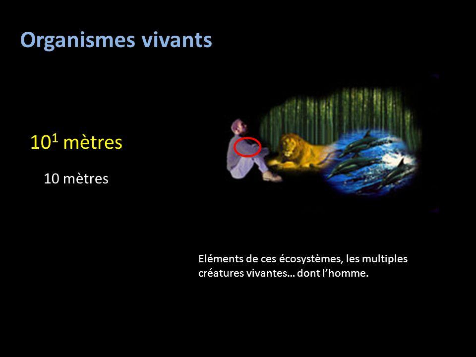 Organismes vivants 10 1 mètres 10 mètres Eléments de ces écosystèmes, les multiples créatures vivantes… dont l'homme.