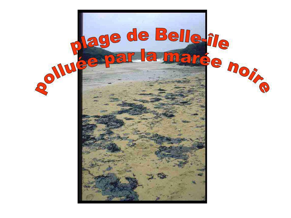 Le 23 décembre les premières nappes de fioul atteignent Les côtes sud (Port Port CotonCoton) de Belle-île.