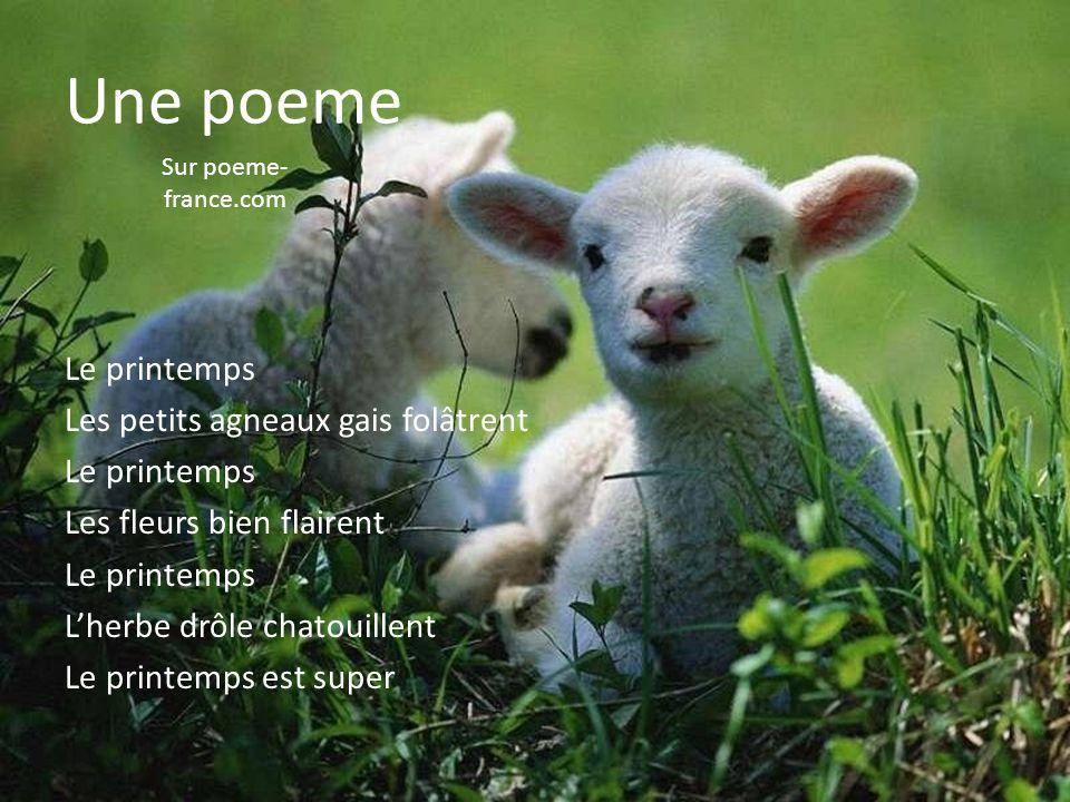 Le printemps Les petits agneaux gais folâtrent Le printemps Les fleurs bien flairent Le printemps L'herbe drôle chatouillent Le printemps est super Un