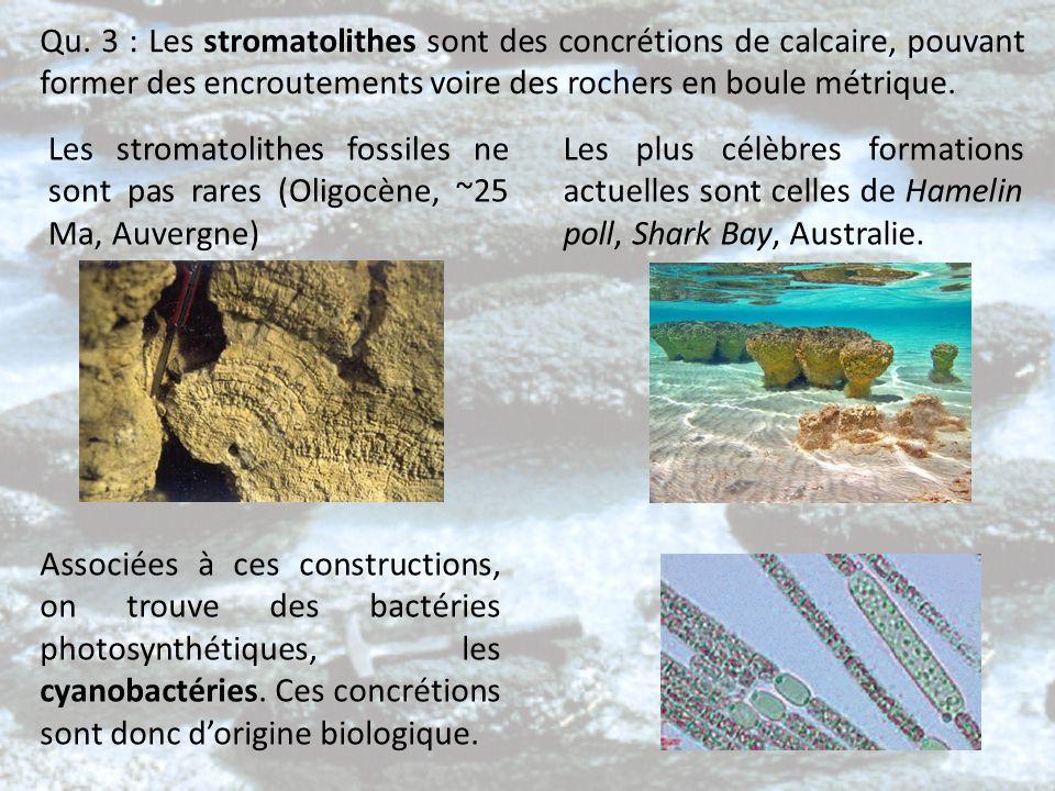 Qu. 3 : Les stromatolithes sont des concrétions de calcaire, pouvant former des encroutements voire des rochers en boule métrique. Les stromatolithes