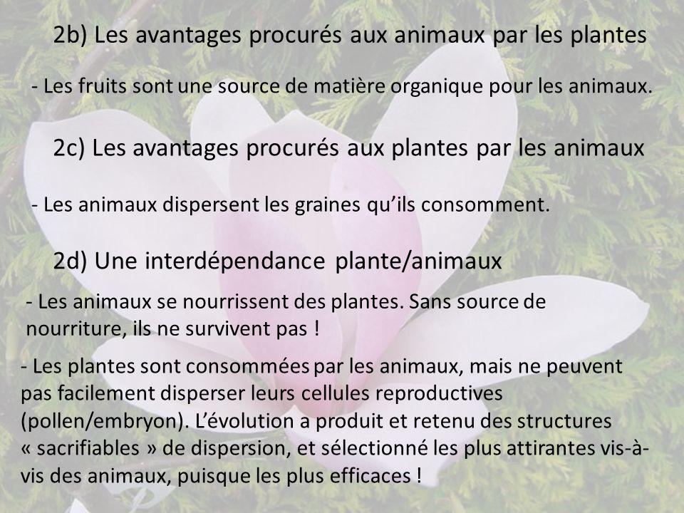 2b) Les avantages procurés aux animaux par les plantes - Les fruits sont une source de matière organique pour les animaux. - Les plantes sont consommé