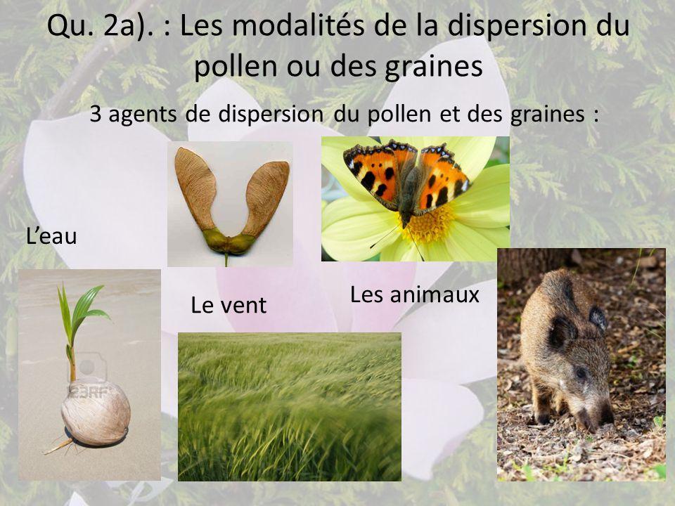 Qu. 2a). : Les modalités de la dispersion du pollen ou des graines 3 agents de dispersion du pollen et des graines : L'eau Le vent Les animaux