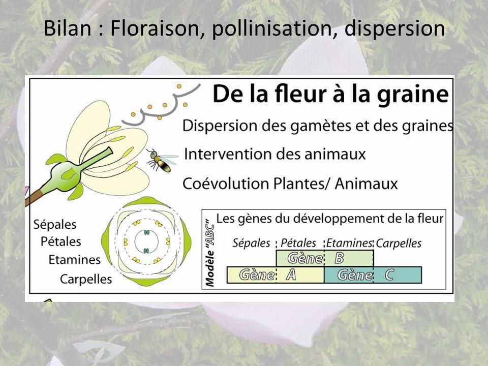 Bilan : Floraison, pollinisation, dispersion