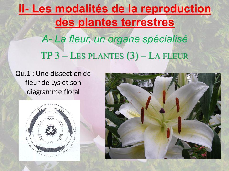 A- La fleur, un organe spécialisé TP 3 – L ES PLANTES (3) – L A FLEUR Qu.1 : Une dissection de fleur de Lys et son diagramme floral II- Les modalités