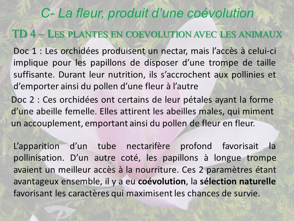 Qu.5 : les modalités de la fécondation 1 Le pollen sur le stigmate du carpelle va « germer », faisant parvenir ses cellules au cœur du carpelle.