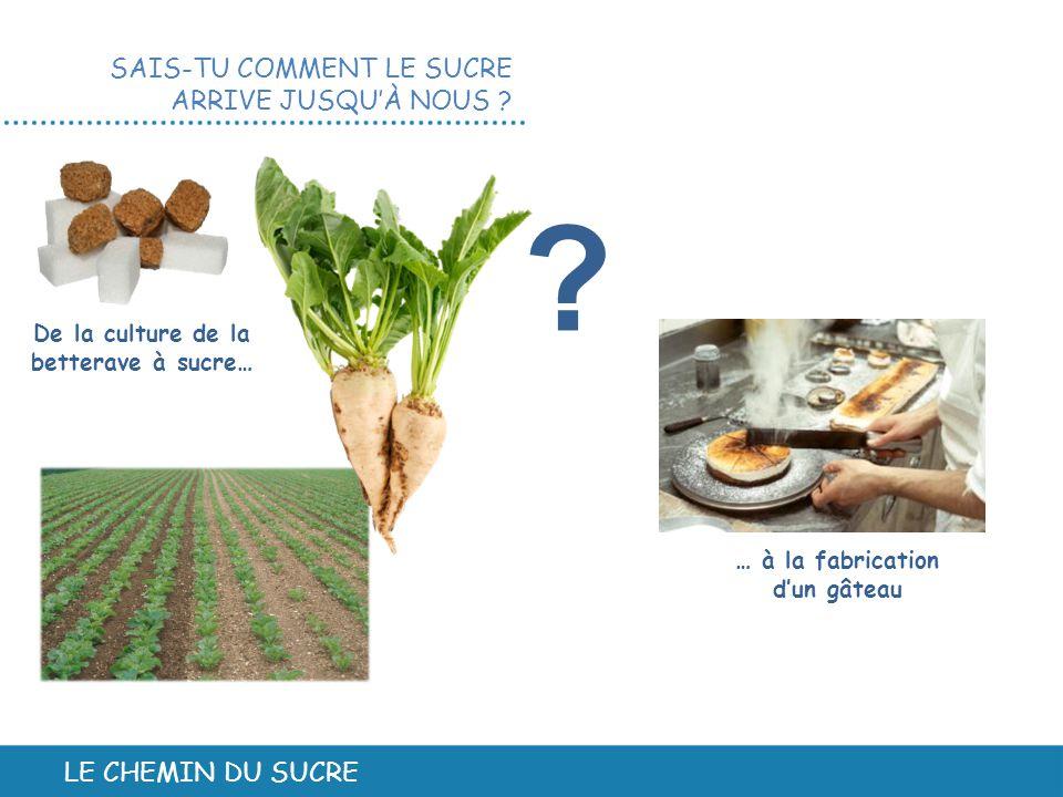LE CHEMIN DU SUCRE SAIS-TU COMMENT LE SUCRE ARRIVE JUSQU'À NOUS ? De la culture de la betterave à sucre… … à la fabrication d'un gâteau ?
