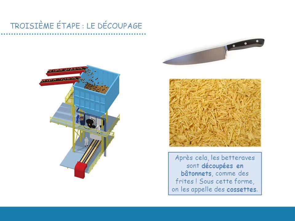 TROISIÈME ÉTAPE : LE DÉCOUPAGE Après cela, les betteraves sont découpées en bâtonnets, comme des frites .