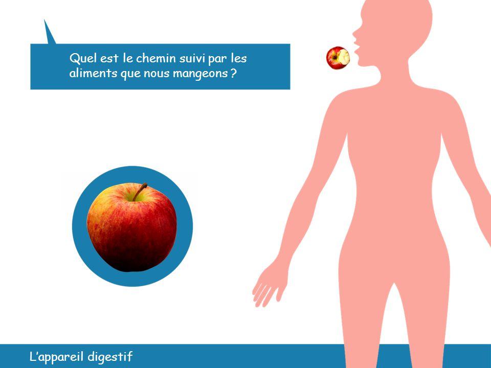 L'appareil digestif Quel est le chemin suivi par les aliments que nous mangeons ? 4