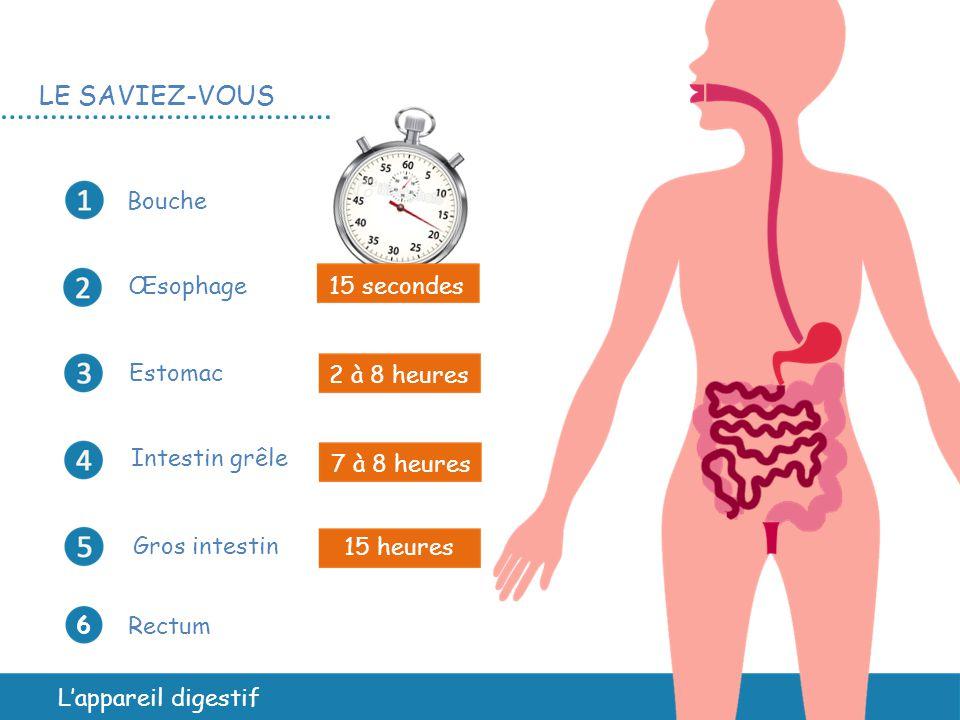 L'appareil digestif Bouche Œsophage Estomac Intestin grêle Gros intestin Rectum 6 6 15 secondes 2 à 8 heures 7 à 8 heures 15 heures LE SAVIEZ-VOUS