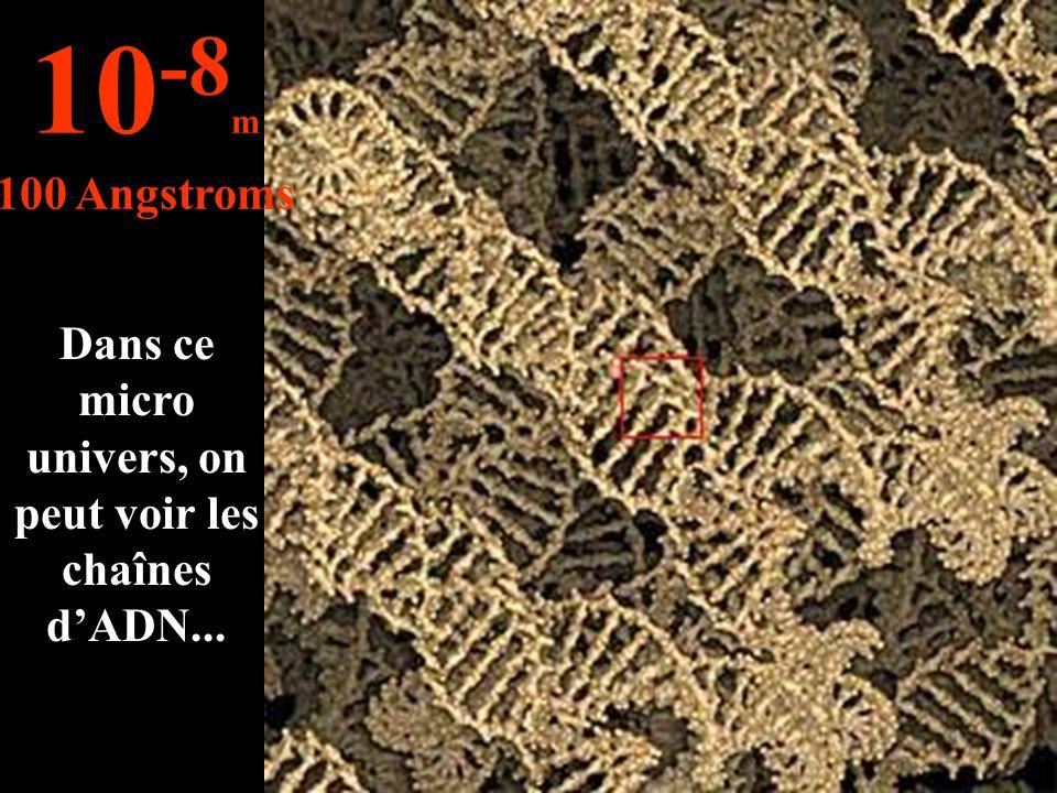 Dans ce micro univers, on peut voir les chaînes d'ADN... 10 -8 m 100 Angstroms