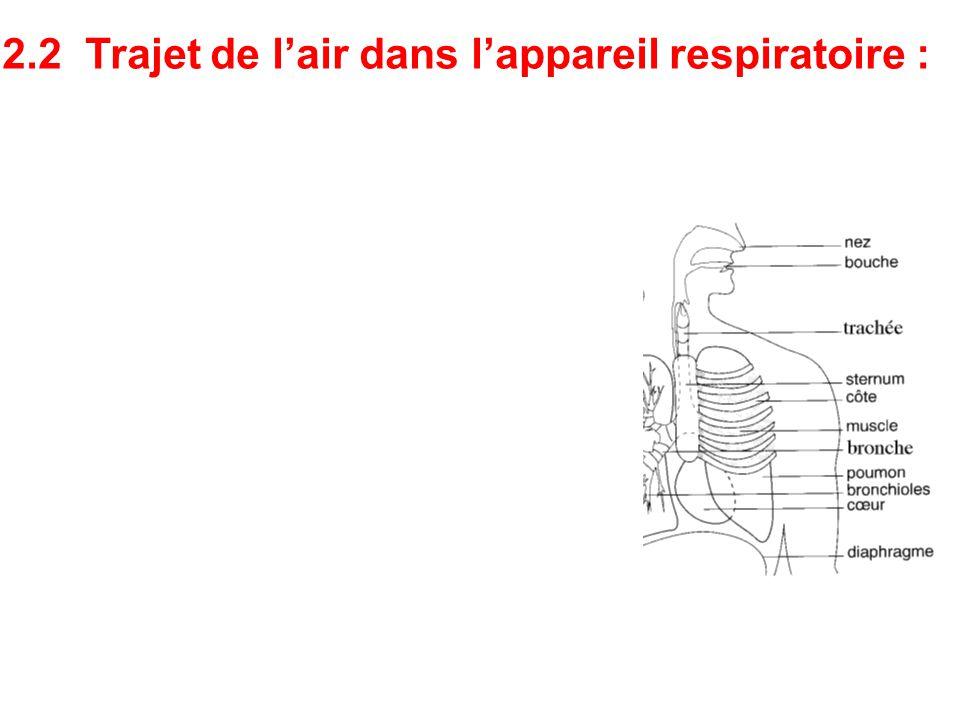 Nez ou bouche Trachée Bronches Bronchioles Alvéoles Air inspiré Air expiré 2.2 Trajet de l'air dans l'appareil respiratoire :