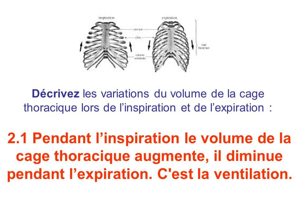 Décrivez les variations du volume de la cage thoracique lors de l'inspiration et de l'expiration : 2.1 Pendant l'inspiration le volume de la cage thoracique augmente, il diminue pendant l'expiration.