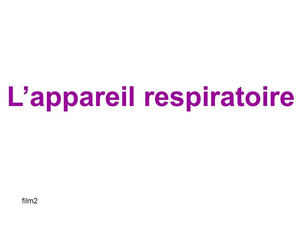 L'appareil respiratoire film2