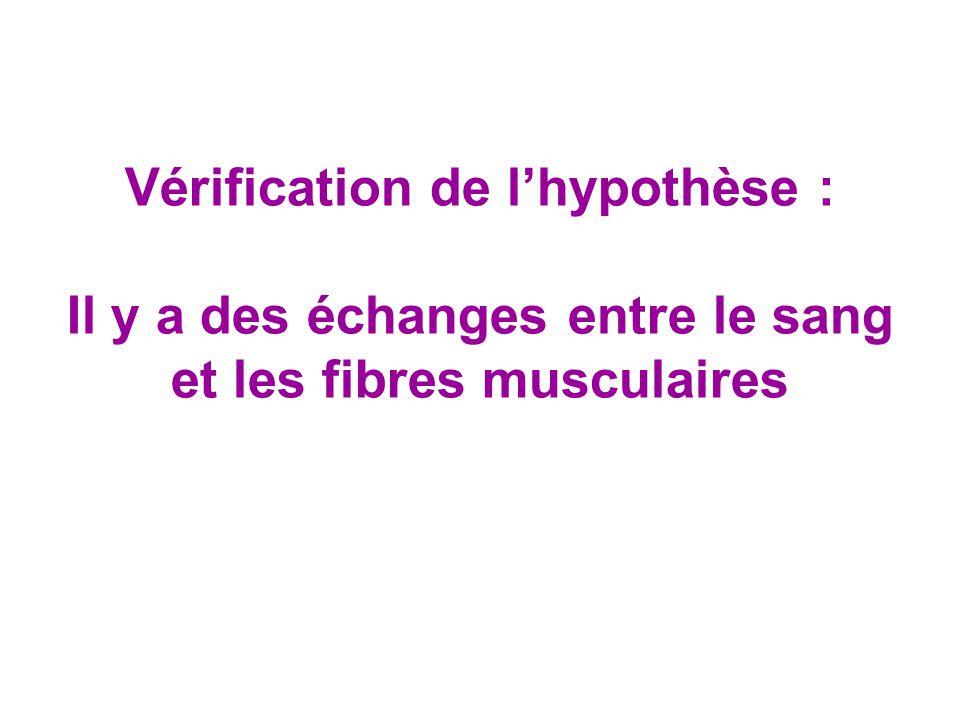 Vérification de l'hypothèse : Il y a des échanges entre le sang et les fibres musculaires