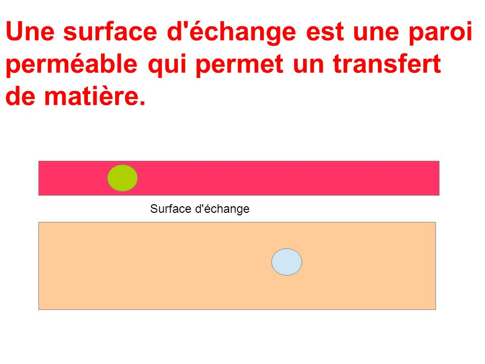 Une surface d'échange est une paroi perméable qui permet un transfert de matière. Surface d'échange
