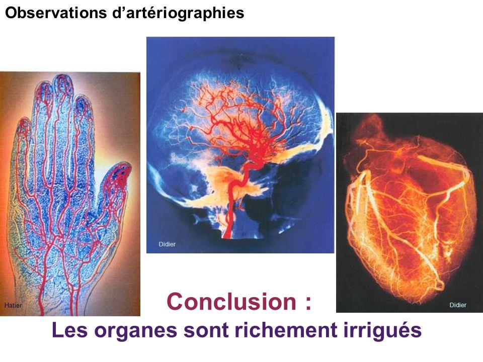Hatier Didier Observations d'artériographies Les organes sont richement irrigués Conclusion :