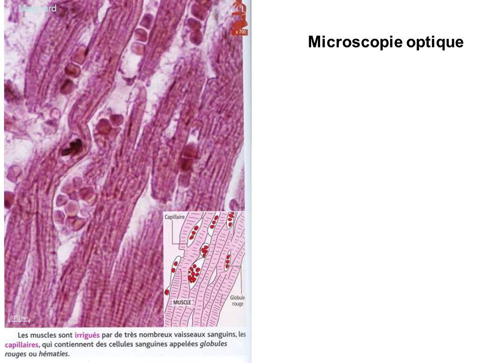 Magnard Microscopie optique
