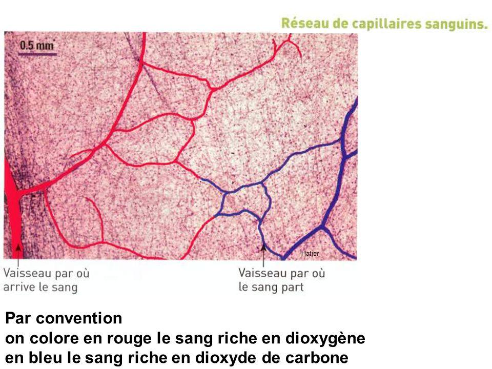 Hatier Par convention on colore en rouge le sang riche en dioxygène en bleu le sang riche en dioxyde de carbone
