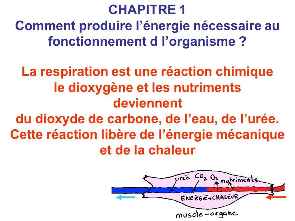 La respiration est une réaction chimique le dioxygène et les nutriments deviennent du dioxyde de carbone, de l'eau, de l'urée. Cette réaction libère d