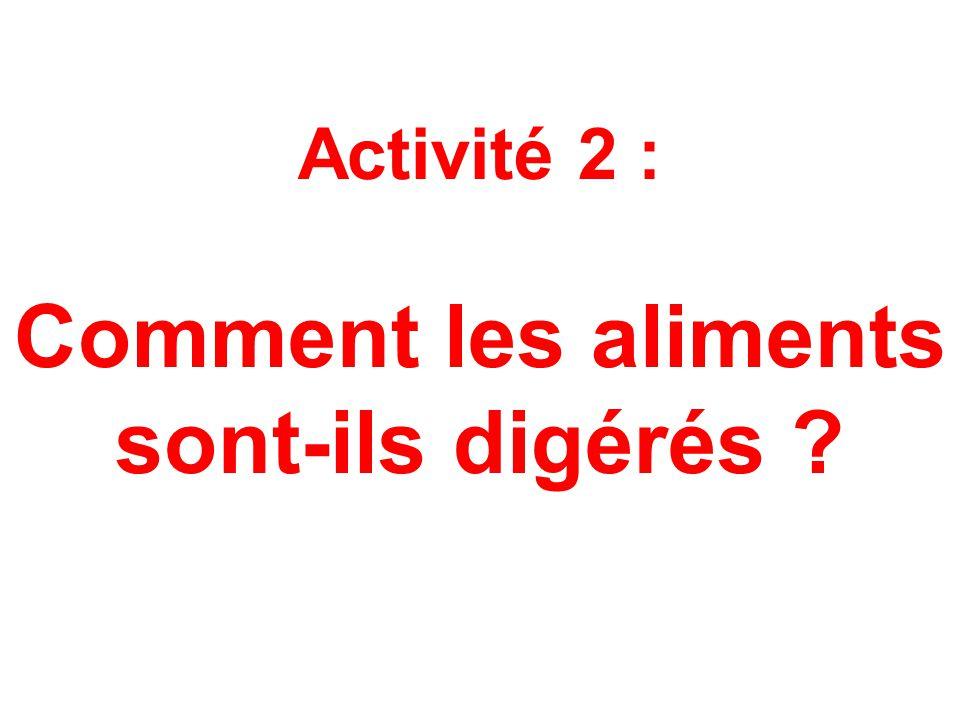 Activité 2 : Comment les aliments sont-ils digérés ?
