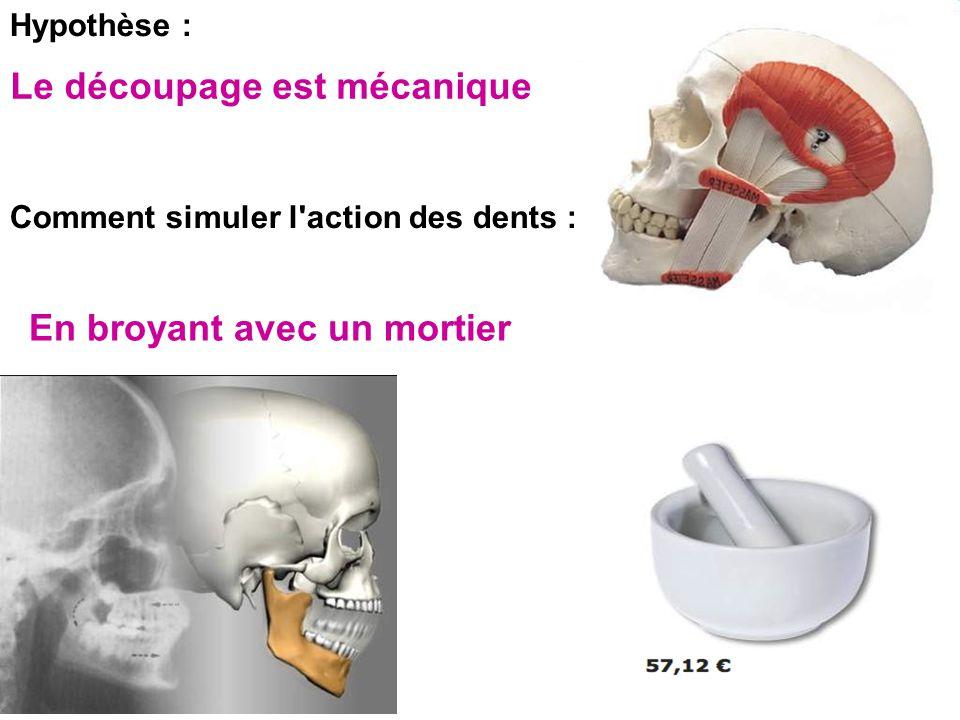 Hypothèse : Comment simuler l'action des dents : Le découpage est mécanique En broyant avec un mortier