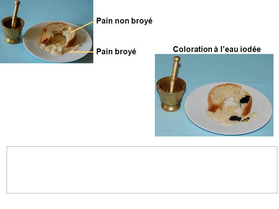 Coloration à l'eau iodée La coloration est la même pour le pain broyé que pour le pain non broyé, on en déduit : le pain broyé contient autant d'amido