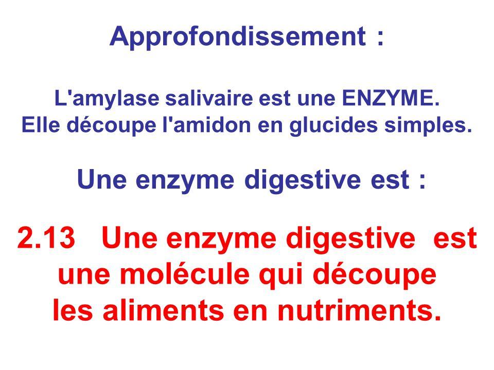 Approfondissement : L'amylase salivaire est une ENZYME. Elle découpe l'amidon en glucides simples. 2.13 Une enzyme digestive est une molécule qui déco