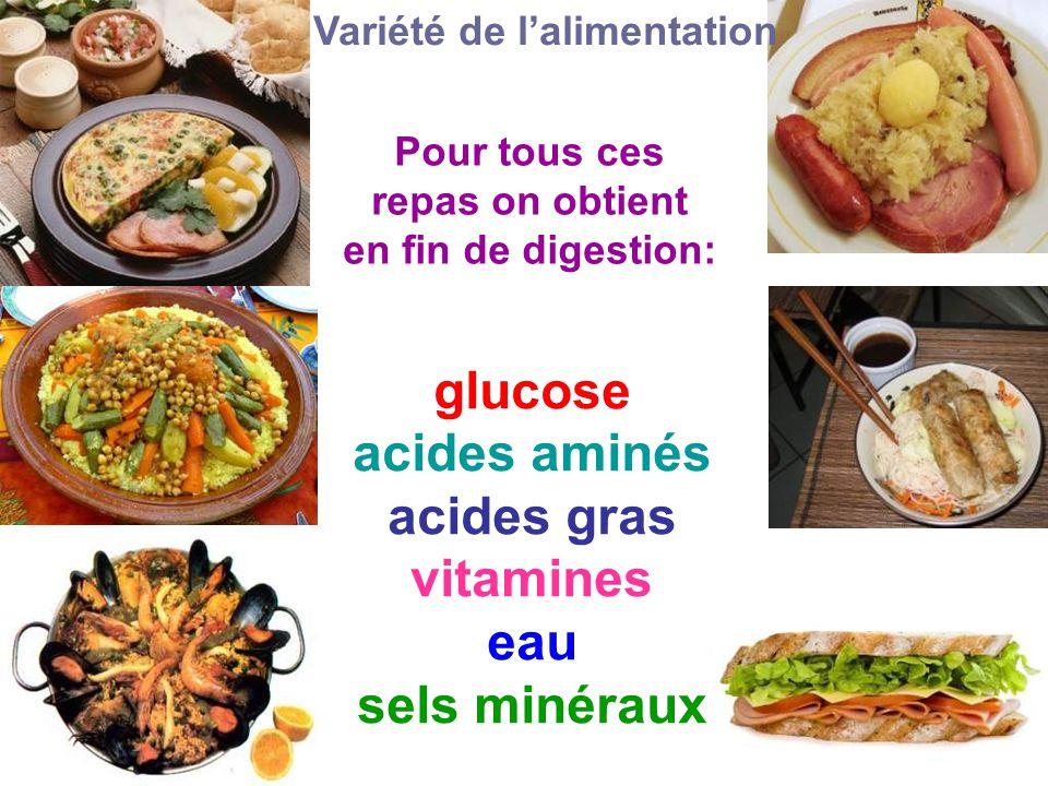 glucose acides aminés acides gras vitamines eau sels minéraux Variété de l'alimentation Pour tous ces repas on obtient en fin de digestion: