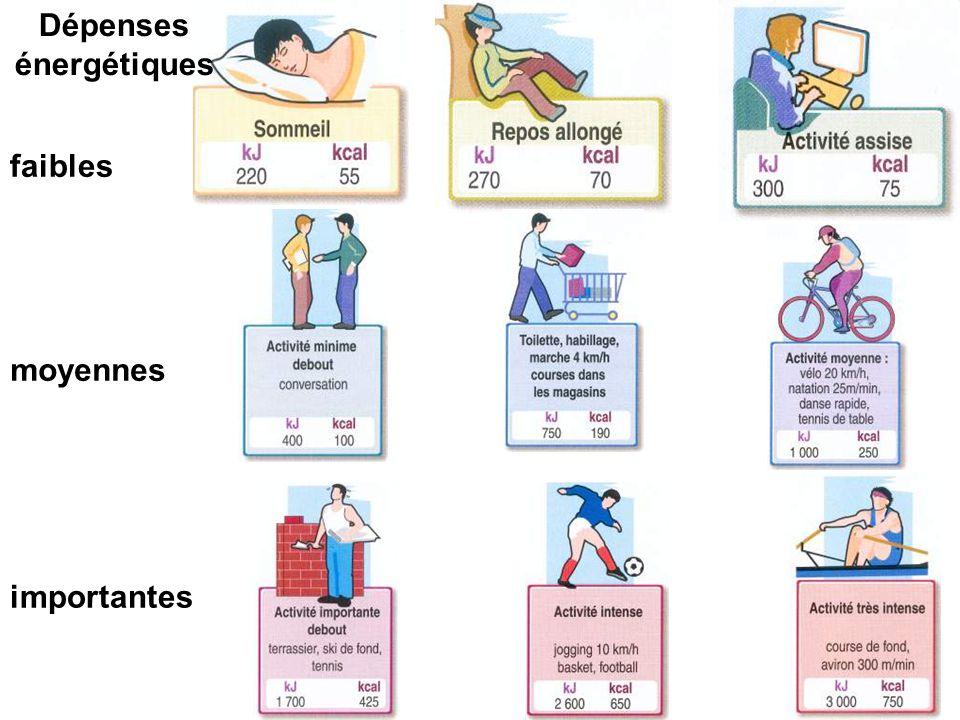 La dépense énergétique dépend de : - l'âge - du sexe - de l'activité