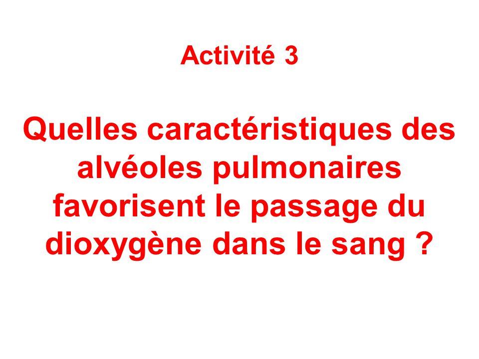 Activité 3 Quelles caractéristiques des alvéoles pulmonaires favorisent le passage du dioxygène dans le sang ?