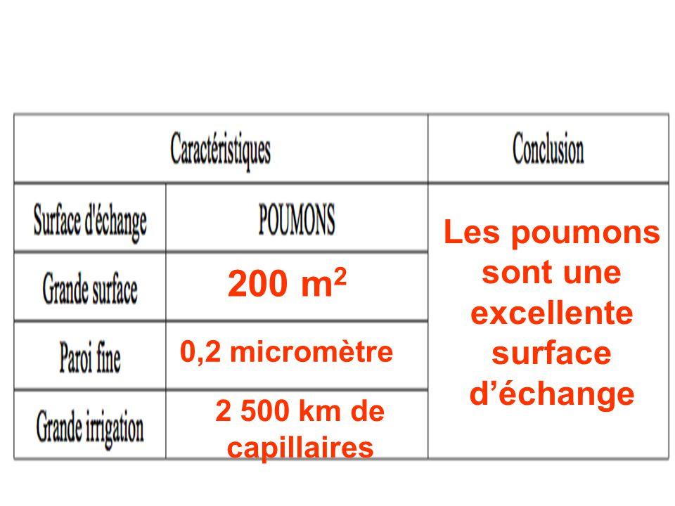 200 m 2 0,2 micromètre 2 500 km de capillaires Les poumons sont une excellente surface d'échange