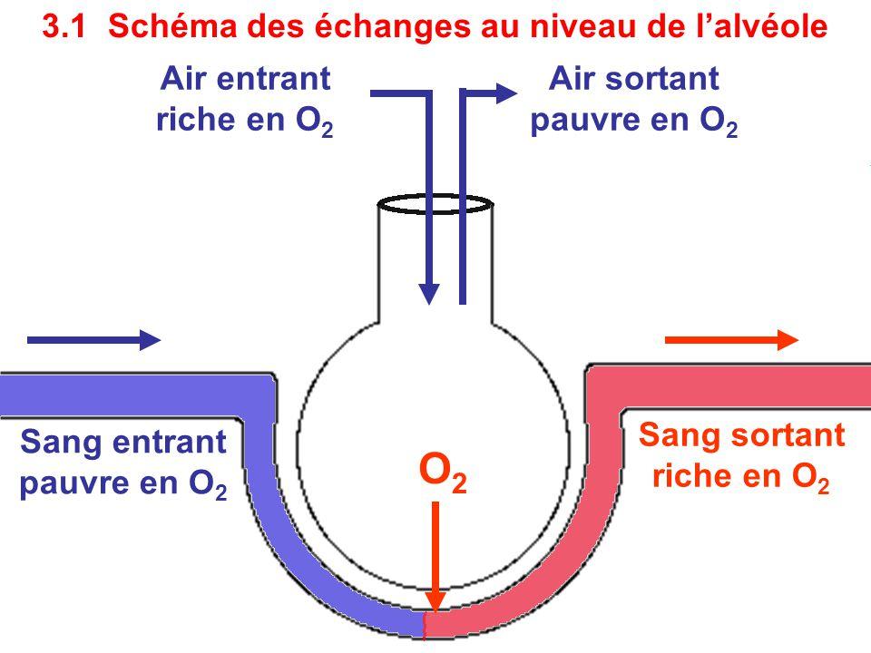 Air entrant riche en O 2 Sang sortant riche en O 2 O2O2 Air sortant pauvre en O 2 Sang entrant pauvre en O 2 3.1 Schéma des échanges au niveau de l'alvéole