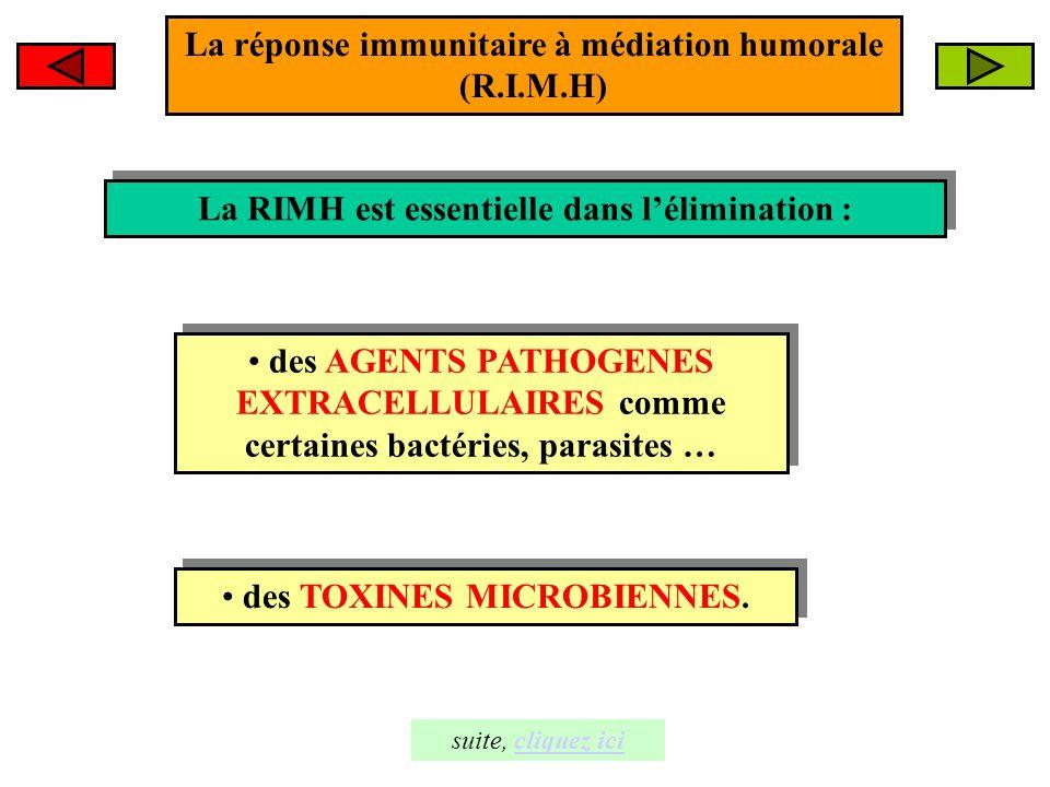 La réponse immunitaire à médiation humorale (R.I.M.H) La RIMH est essentielle dans l'élimination : La RIMH est essentielle dans l'élimination : des AG
