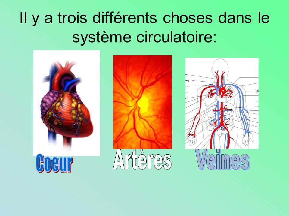 Il y a trois différents choses dans le système circulatoire: