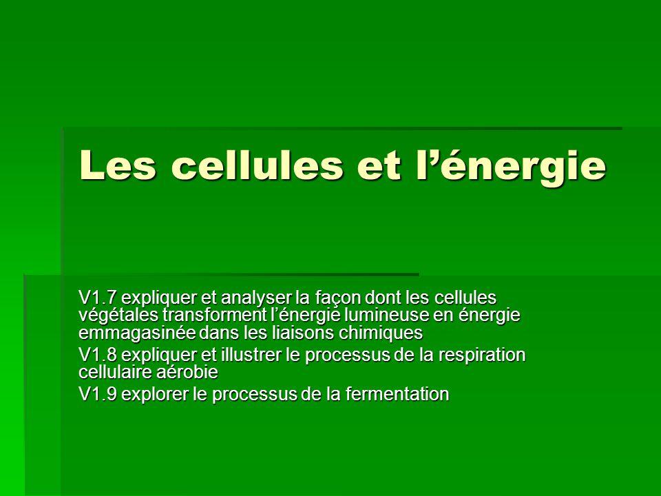 Les cellules et l'énergie V1.7 expliquer et analyser la façon dont les cellules végétales transforment l'énergie lumineuse en énergie emmagasinée dans