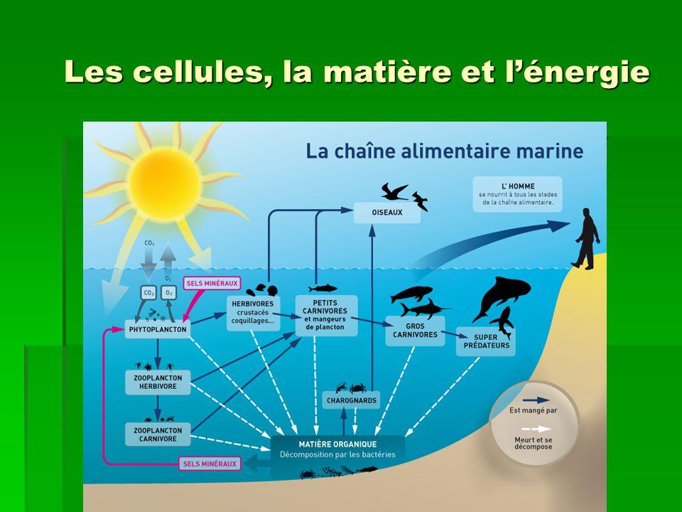 Les cellules, la matière et l'énergie
