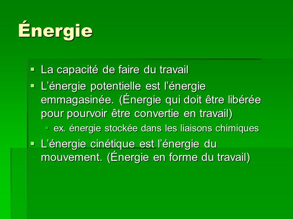 Énergie  La capacité de faire du travail  L'énergie potentielle est l'énergie emmagasinée. (Énergie qui doit être libérée pour pourvoir être convert