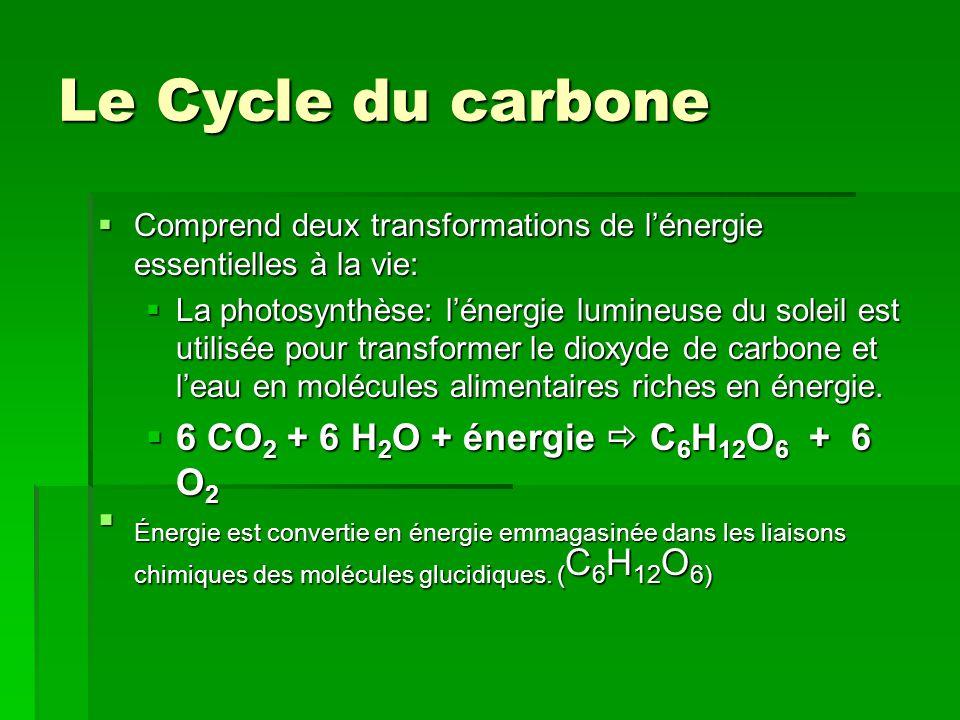 Le Cycle du carbone  Comprend deux transformations de l'énergie essentielles à la vie:  La photosynthèse: l'énergie lumineuse du soleil est utilisée