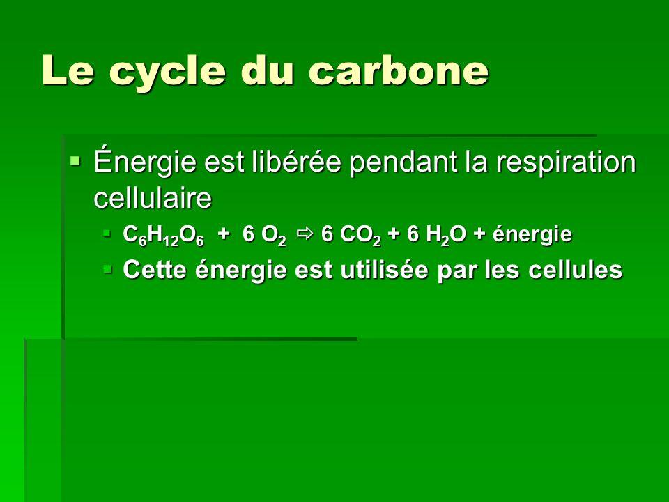 Le cycle du carbone  Énergie est libérée pendant la respiration cellulaire  C 6 H 12 O 6 + 6 O 2  6 CO 2 + 6 H 2 O + énergie  Cette énergie est ut