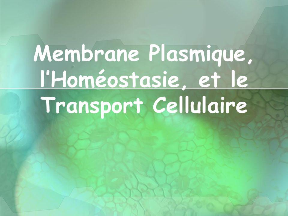 Membrane Plasmique, l'Homéostasie, et le Transport Cellulaire