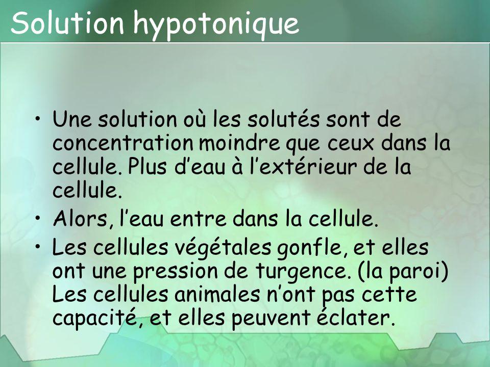 Solution hypotonique Une solution où les solutés sont de concentration moindre que ceux dans la cellule. Plus d'eau à l'extérieur de la cellule. Alors