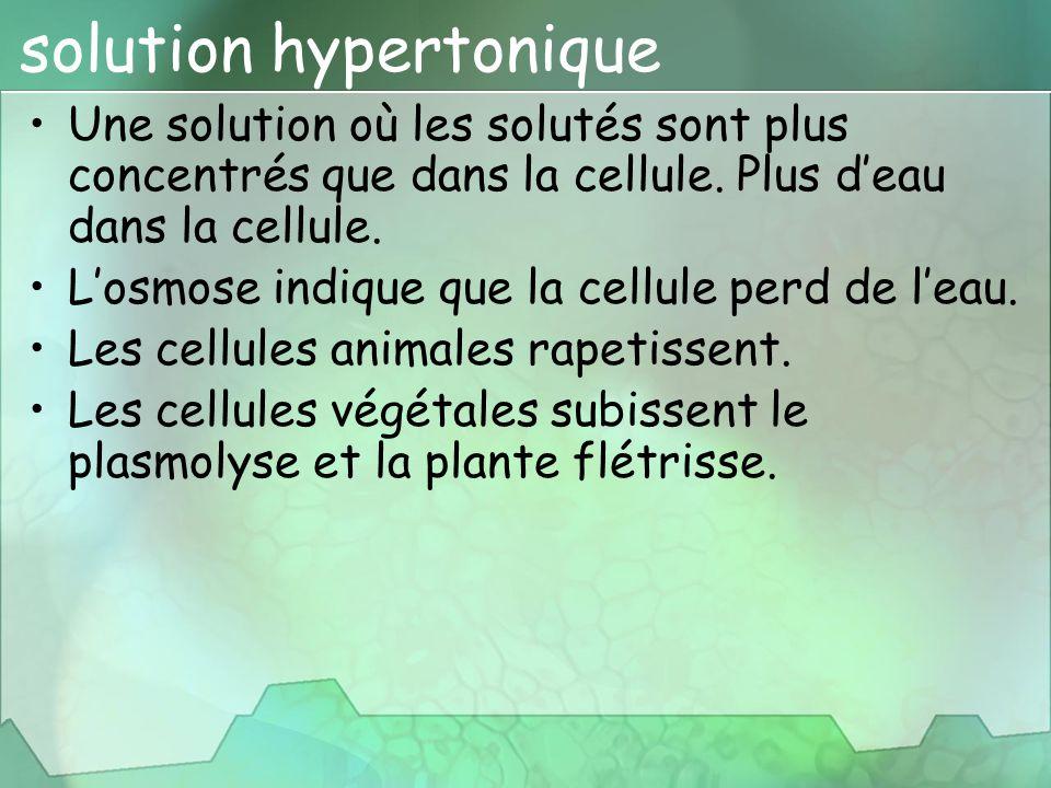 solution hypertonique Une solution où les solutés sont plus concentrés que dans la cellule. Plus d'eau dans la cellule. L'osmose indique que la cellul