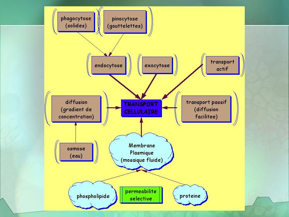 Homéostasie Le milieu interne de l'organisme (la cellule) demeure inchangé, même si le milieu externe varie La membrane plasmique contrôle l'homéostasie